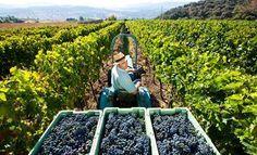 Ronda: una ruta del vino por explotar.  Conoce las bodegas que esconde esta ciudad y sus increíbles vinos.   #ronda #vinos #enoturismo