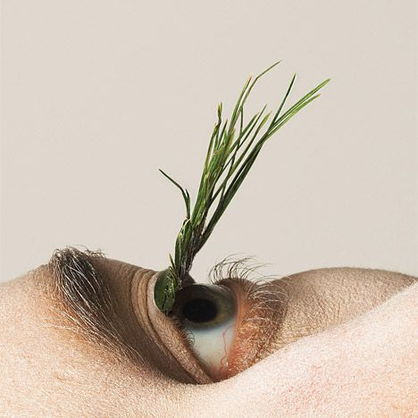 Grass blades and pine needles were used to make these entirely natural false eyelashes.