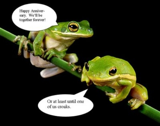 Funny Pictures of Frogs   ... frogs fun funny frog pictures funny frogs funny frogs collection funny