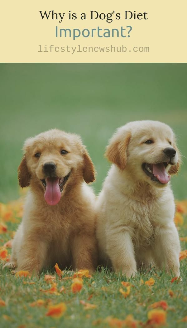 Why Is A Dog S Diet Important Puppy Training Animal Photography Puppies
