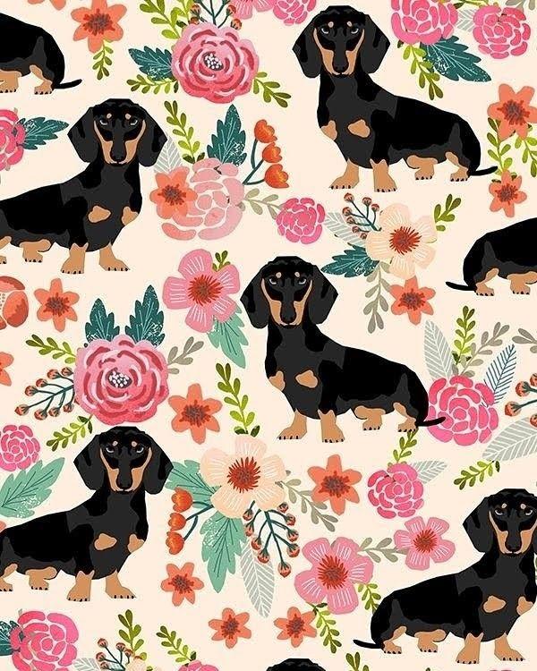 Weiner Dog Wallpaper