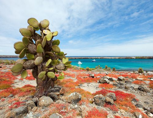 7 Adventurous Honeymoon Destinations: Galapagos Islands, Ecuador