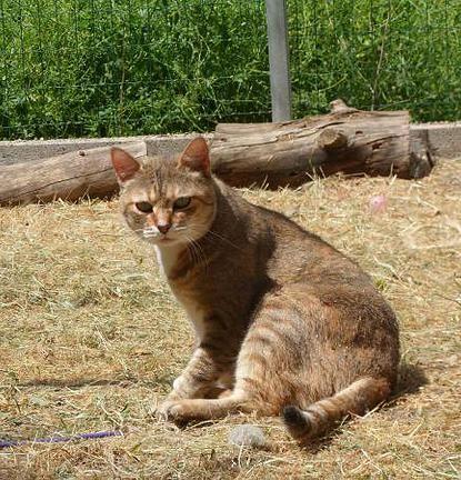 KIM, chatte née en 2006, SPA de Flayosc (83)