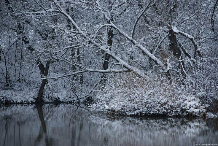 winter treesGoogle Image, Winter Pictures, Resolutions Winter, Winter Trees, Image Search, High Resolutions, Bing Image, Google Search, Pictures Trees
