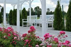 Znalezione obrazy dla zapytania róże pnące w ogrodzie