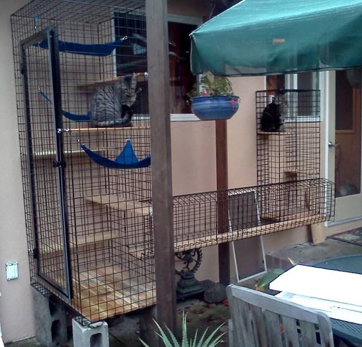 113 best cats - catio enclosure images on pinterest | cat ... - Cat Patio Ideas