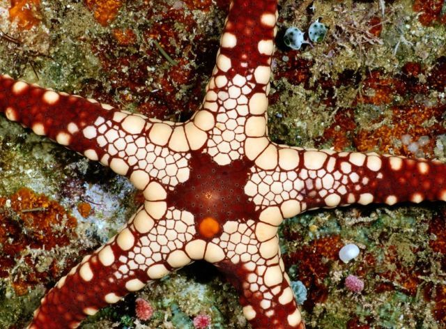 Beautiful Patterns in Nature from National Geographic. Part 3 (64 pics) - Picture #10 - Izismile.com