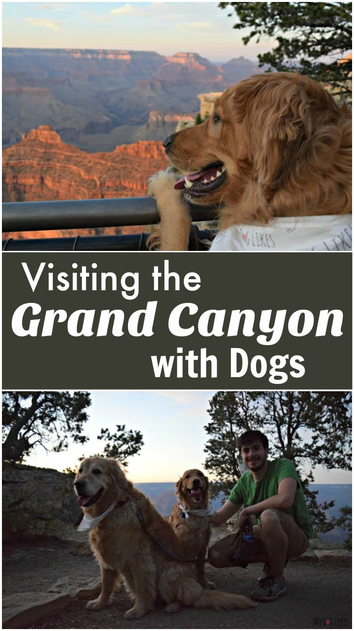 Planning a road trip with your dog? Check out the @MyDogLikes dog friendly travel series for ideas of where to go and what to dog - including this visit to the Grand Canyon!
