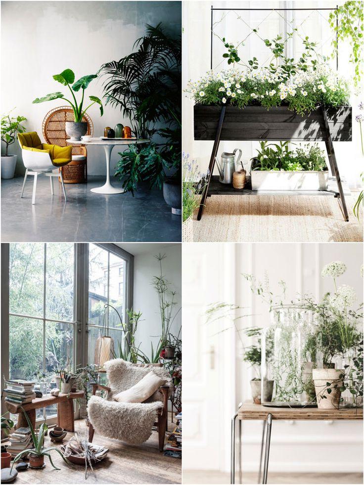 Oltre 1000 idee su arredamento piante da interni su - Piante che purificano l aria in camera da letto ...