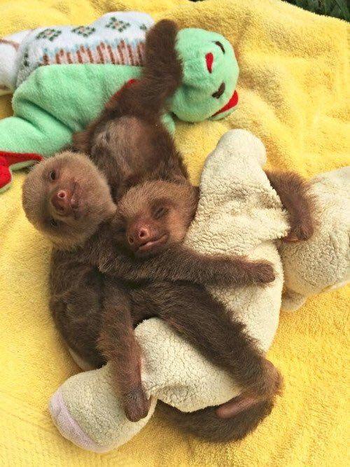 """babyanimalpic: """"Love baby animals? You will love this blog! """""""