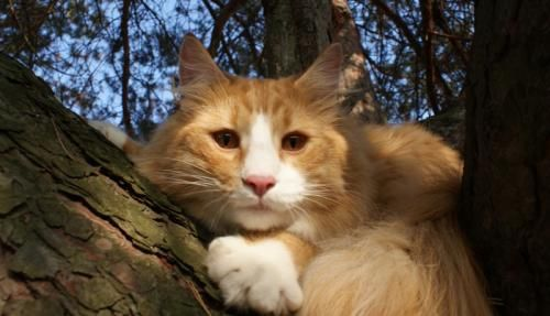 Dlaczego kot liże Twoje włosy i twarz?  Pierwszym czego doświadcza kociak, zanim jeszcze otworzy oczy, jest lizanie i mycie przez matkę. Lizanie jest demonstracją miłości i opie...