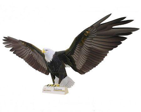 Бумажные модели. Белоголовый орлан — крупная хищная птица семейства ястребиных, обитающая на территории Северной Америки
