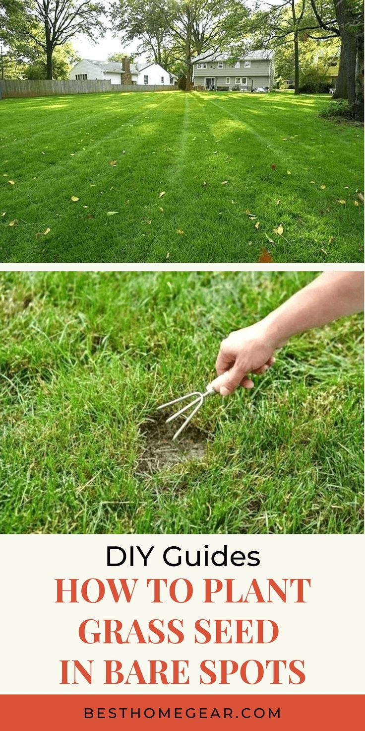 How To Plant Grass Seed In Bare Spots Best Home Gear Planting Grass Lawn Repair Grass Seed