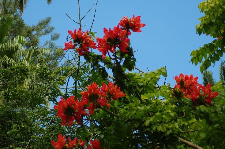 Flora - Santa Cruz de Tenerife - Parque Garcia Sanabria