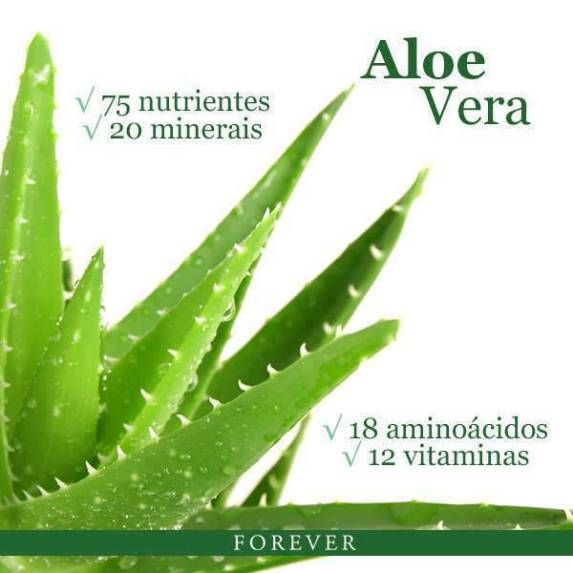 Aloe Barbadensis Miller . ACE Amongst All Aloes