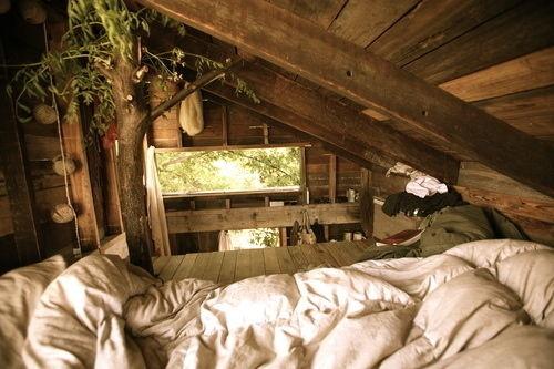 Tree house. nap spot.