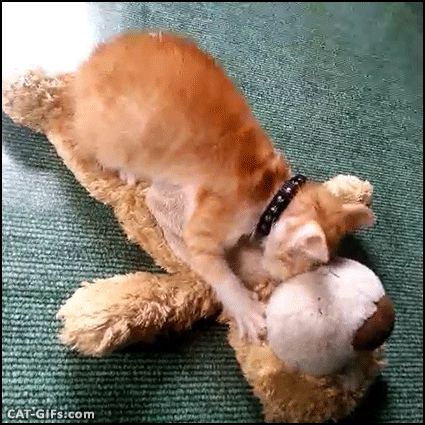 """Animated Kitten GIF • Crazy Kitten kneading Mom face. """"Don't smile, don't look at me when I'm making biscuits, turn your head."""""""