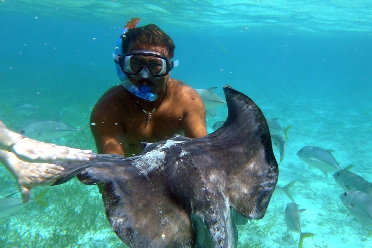 We will be snorkeling with sting rays in Halfmoon Cay!