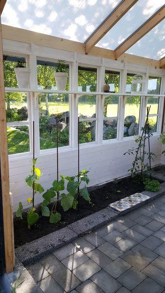 växthus,diy,gör det själv,do-it-yourself,gamla fönster