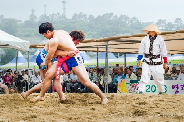 """Ssiruem is a Korean traditional sport mainly played during Chuseok. Pulling on the opponent's """"satba"""" and throwing them to the ground so that their upper body touches the ground is the ultimate goal of this game. The winner is called """"Cheonha Jangsa"""" and is rewarded with a bull and 1 kg of rice. (Courtesy Photo Ministry of Culture and Tourism)"""