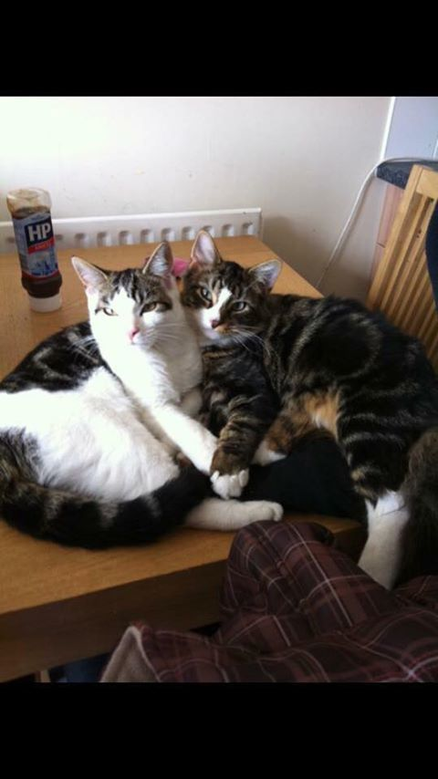 Has anyone seen the cat on the left? This is Oscar missing from Purvis Gardens Sholing, Southampton. He went out in the early hours around 2am on 11.2.17, and has not been back since. This is not like him at all. I'm especially worried because of the cold weather. He can be quite aRead More