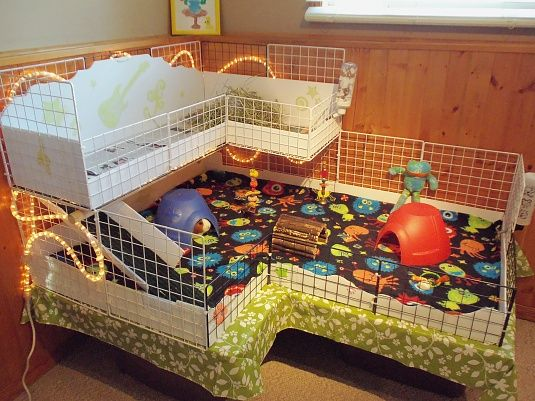 Creative Indoor Rabbit Hutch