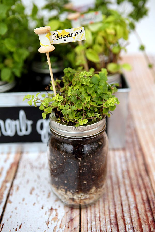 Create your own herb garden in mason jars! Label with adorable wooden spools!