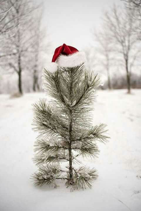 ❤  With Love and a Merry Christmas to all the Charlie Brown Trees of the world ...