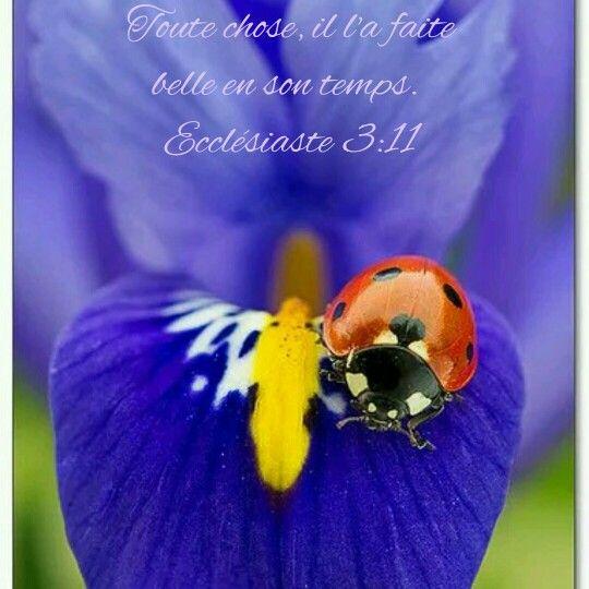 Ecclésiaste 3:11