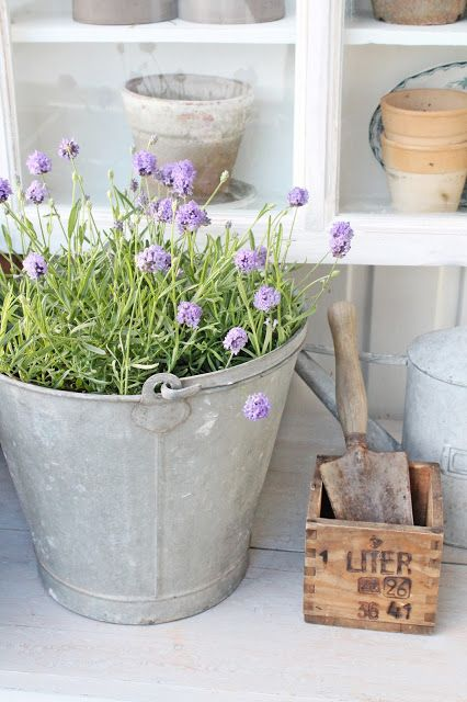 love a little bit of lavender and a metal bucket xo