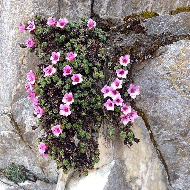 Erba di San Giuseppe. I fiori delle Alpi Apuane
