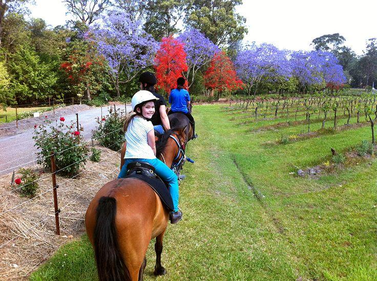 Cassegrain Wines - Estate - Horse Riding