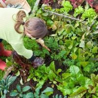 Tips on How to Create a Vegetable Garden: Ideas & Encouragement When Planting Vegetables