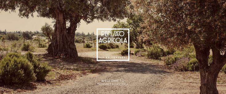 A fértil zona do Barrocal Algarvio, a sotavento da região, deu frutos em forma…