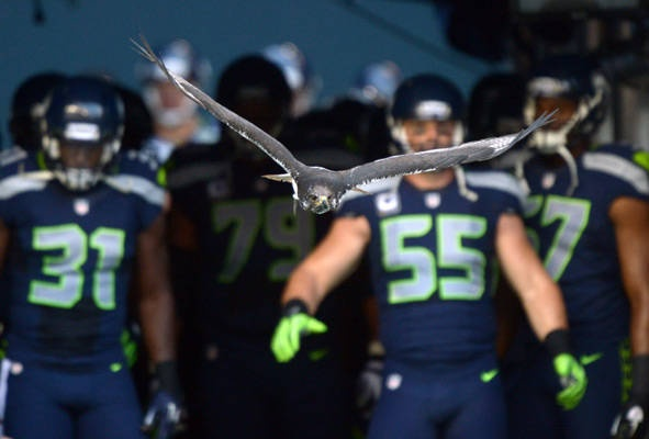 Seattle Seahawks augur hawk mascot Taima flies onto the field before the game.