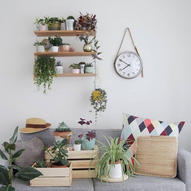 Des plantes et encore des plantes muramur mam plantshelfie plantgang