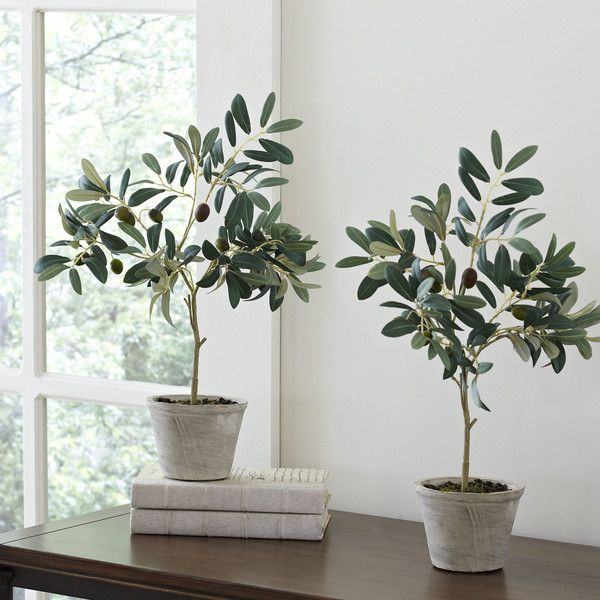 Birch Lane Faux Olive Trees | Birch Lane, I used these beauties on my back porch to give it a South of France feel. #entertainwithbirchlane