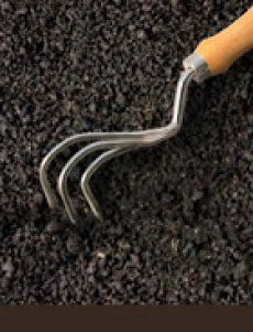 Sarchio ad artiglio BURGON & BALL - utensile utile per smuovere (sarchiatura) il terreno, interrando il concime o per interrompere lo sviluppo di infestanti intervenendo poco dopo la loro nascita - Dimensioni: Lunghezza: cm 47