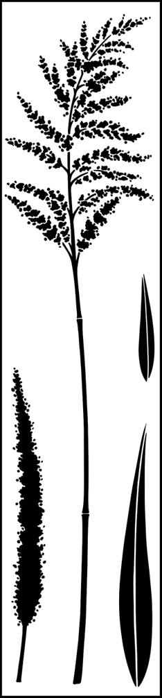 ornamental grass stencils stensils and stencles