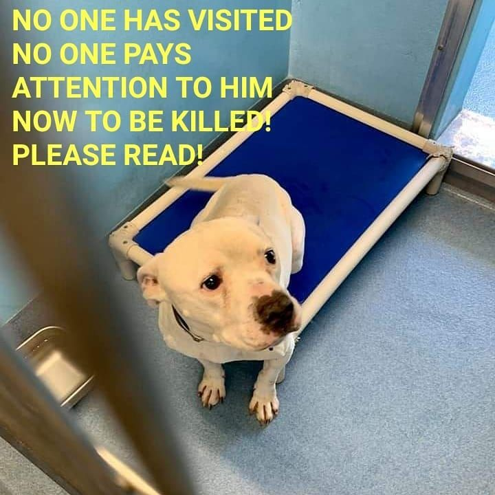 5 22 19 Nigel To Be Killed Rescues Please Pull He Has Been Overlooked His Whole 4 Years Of Being Here With Images Animal Rescue Dog Adoption Animal Projects