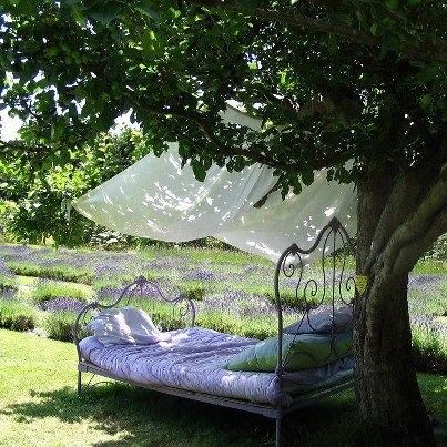 Old iron bed under the shade of a tree with the smell of the lavender field....heaven!