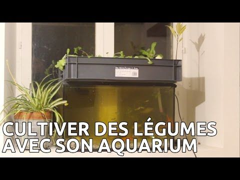 25 best ideas about petit aquarium on pinterest aquarium design id es d 39 aquarium and - Petit aquarium design ...