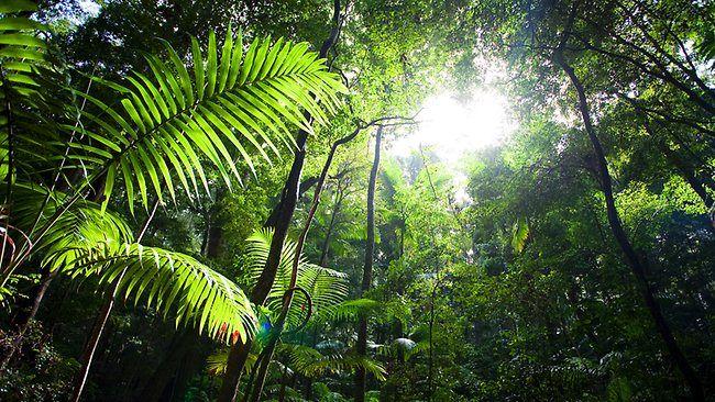 Tropical rainforest around Wanggoolba Creek on Fraser Island. Picture: Alison Coates