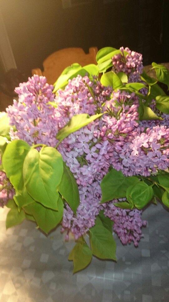 Blomster 2015 maj