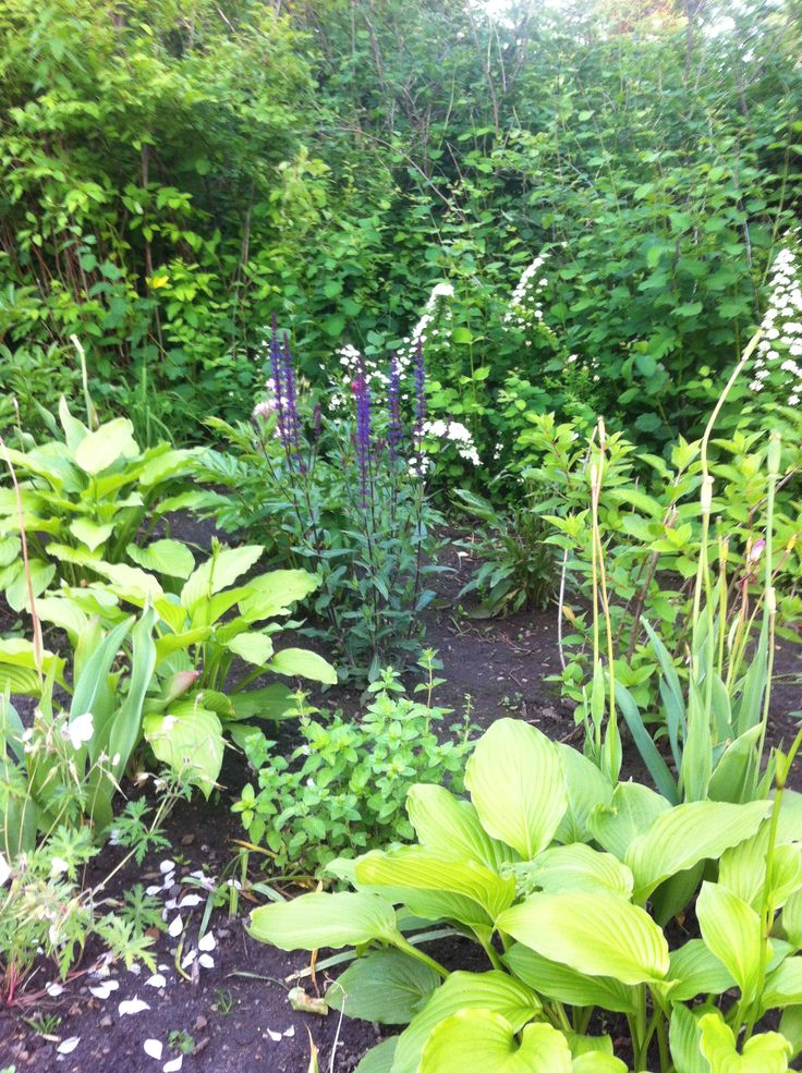 My new bed with perennials (early summer)