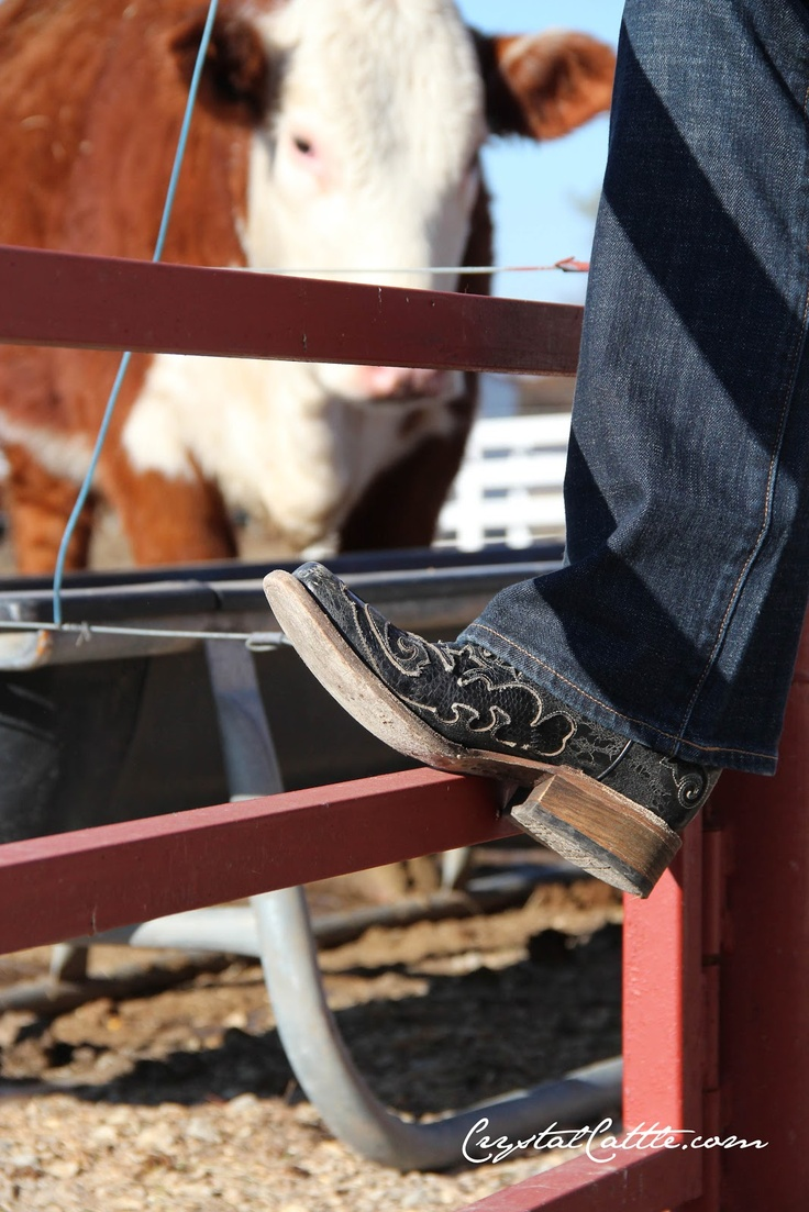 Crystal Cattle: Corral Boots and Country Outfitter Boot Giveaway
