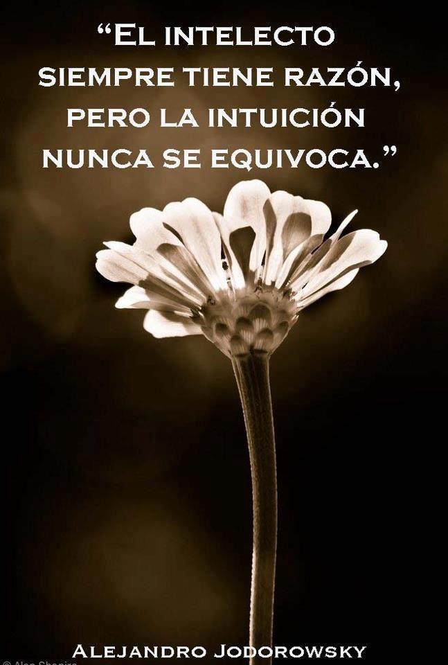 El intelecto siempre tiene razón, pero la intuición nunca se equivoca ¡Buenas noches!