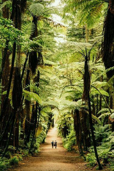 At the Redwood forest in Rotura, New Zealand.