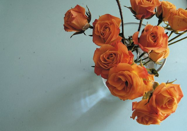savvydarling:    Orange on blue by maureen lunn on Flickr.