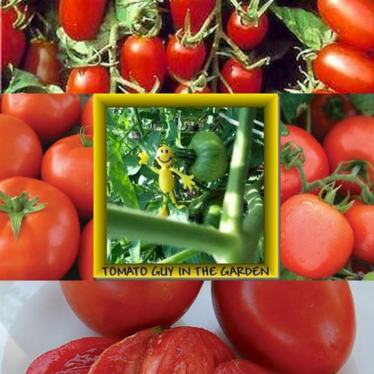 MY QUALITY TIME #Tomatoes http://www.myqualitytime.net/